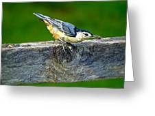 Bird With The Seed Greeting Card