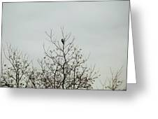 Bird005 Greeting Card