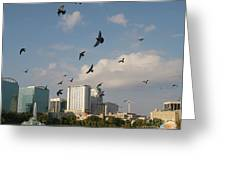 Birded Dowtown Greeting Card