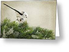 Birdie Stilllife Greeting Card