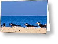 Birdline Greeting Card by Gary Dean Mercer Clark