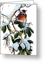 Birds 05 Varied Thrush On Arbutus Robert Bateman Sqs Robert Bateman Greeting Card