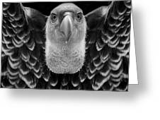 Birds 50 Greeting Card