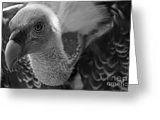 Birds 51 Greeting Card