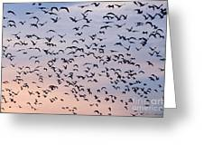 Birds A Flock Of Seagulls Greeting Card