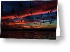 Birds Above Greeting Card