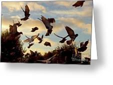 Birds And Fun At Butler Park Austin - Birds 1 Greeting Card
