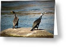 Birds And Lake Greeting Card
