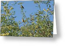 Birds At Peters Canyon Greeting Card