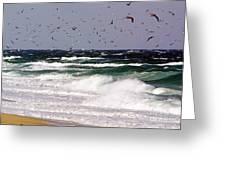 Birds Feeding Frenzy Greeting Card