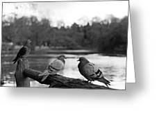 Birds I Greeting Card