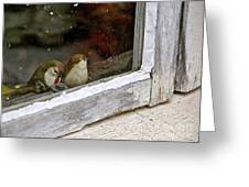Birds In A Window Greeting Card