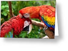 Birds In Love Greeting Card