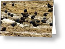 Birds In The Mud Greeting Card