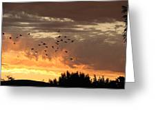 Birds In The Sky Greeting Card