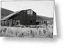 Birds Landing Barn Greeting Card