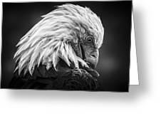 Birds Of Bc - No.30 - Bald Eagle - Keeping Clean Greeting Card