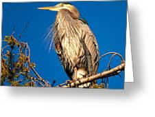 Birds Of Bc - No.7 - Great Blue Heron - Ardea Herodias Greeting Card by Paul W Sharpe Aka Wizard of Wonders