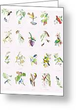 Birds Of Brazil Greeting Card