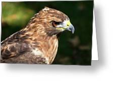 Birds Of Prey Series 5 Greeting Card