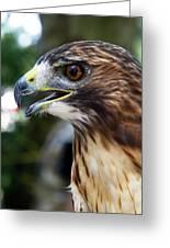 Birds Of Prey Series Greeting Card