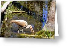 Birds Of The Everglades Greeting Card