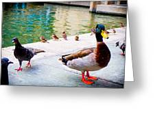 Birds Of The River Greeting Card
