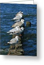 Birds Of The Sea Greeting Card