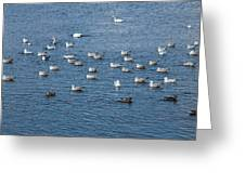 Birds On The Water Greeting Card