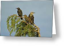 Birds-on-watch Greeting Card