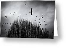 Birds Over Bush Greeting Card
