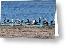 Birds Panorama Greeting Card
