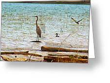 Birds Reflections Greeting Card