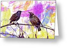 Birds Stare Nature Songbird  Greeting Card