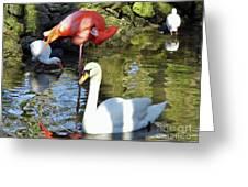 Birds Together Greeting Card