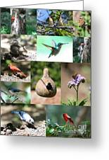 Birdsong Nature Center Collage Greeting Card