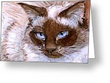 Birman Cat - Blue Eyes. Greeting Card