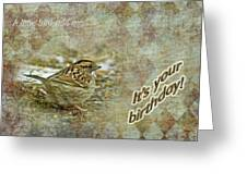 Birthday Greeting Card - White-throated Sparrow Songbird Greeting Card