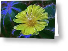Bishop's Cap Cactus Greeting Card