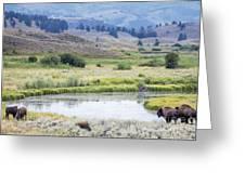 Bison At Slough Creek Greeting Card