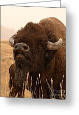 Bison Bellowing At The Sky Greeting Card