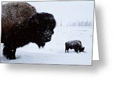 Bison Bison Bison In The Snow Greeting Card