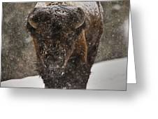 Bison Buffalo Wyoming Yellowstone Greeting Card