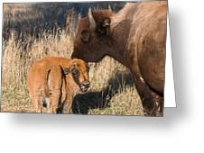Bison Calf And Its Mother Greeting Card