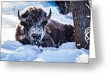 Bison At Frozen Dawn Greeting Card