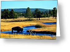 Bison Greeting Card by Carrie Putz