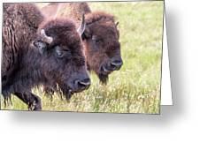 Bison Closeup View Greeting Card