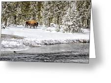 Bison Country  8101 Greeting Card