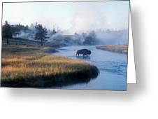 Bison Crosses The Firehole River Greeting Card