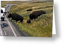 Bison Disrupting Traffic Greeting Card
